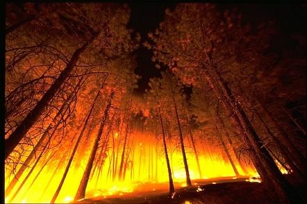 """Ir a Amigos da Terra: """"La Xunta debe asegurar al ciudadano que se ve obligado a participar en la extinción por la debilidad política en la lucha contra incendios forestales"""""""