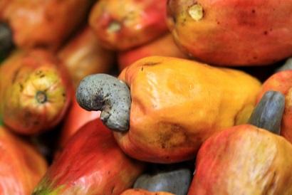 Ir a Amigos de la Tierra España suscribe convenio con asociación comunitaria para la producción de marañón orgánico