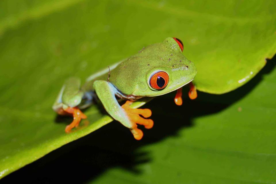 Ir a Amigos de la Tierra España suscribe acuerdo de cooperación con el Ministerio del Ambiente y Los Recursos Naturales de Nicaragua (MARENA)