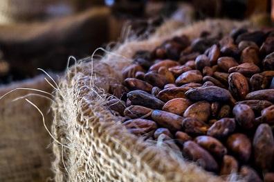 Ir a Amigos de la Tierra España promueve actividades económicas sostenibles y estuvo presente en la 1ª feria del Cacao de la Reserva de Biosfera Río San Juan