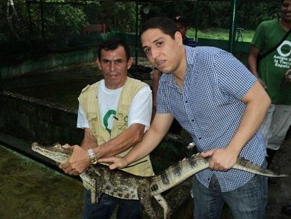 Ir a Liberación de crías de caimán en el Refugio de Vida Silvestre Los Guatuzos, Nicaragua