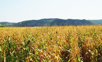 Ir a La financiación del Gobierno a la investigación de cultivos transgénicos es 60 veces mayor que la dedicada a la agricultura ecológica