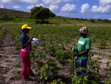 Ir a Cumbre de la crisis alimentaria: Amigos de la Tierra insta a los gobiernos a afrontar el problema del hambre