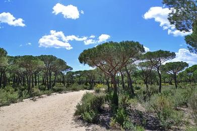 Ir a Las principales ONG ecologistas exigen a la Junta de Andalucía frenar el proyecto de gas en Doñana