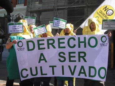 Ir a Mazorcas ecológicas reivindican su derecho a ser cultivadas en España