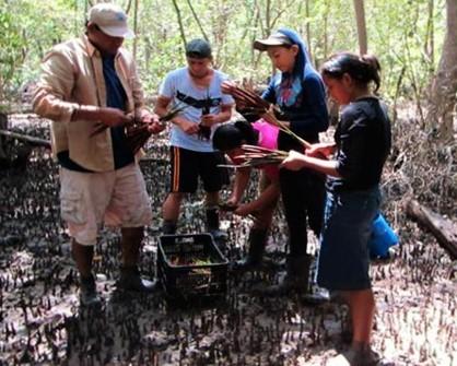 Ir a La Bahía de la Unión quiere recuperar el 100% del Bosque Manglar, El Salvador