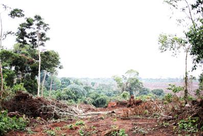 Ir a La producción de aceite de palma y azúcar, motor de la deforestación