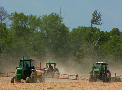Ir a ¿Es la biomasa una fuente de energía realmente renovable?