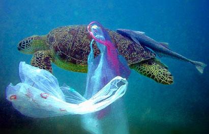 Ir a Día Internacional Sin Bolsas de Plástico de un solo uso: es el momento de las bolsas reutilizables