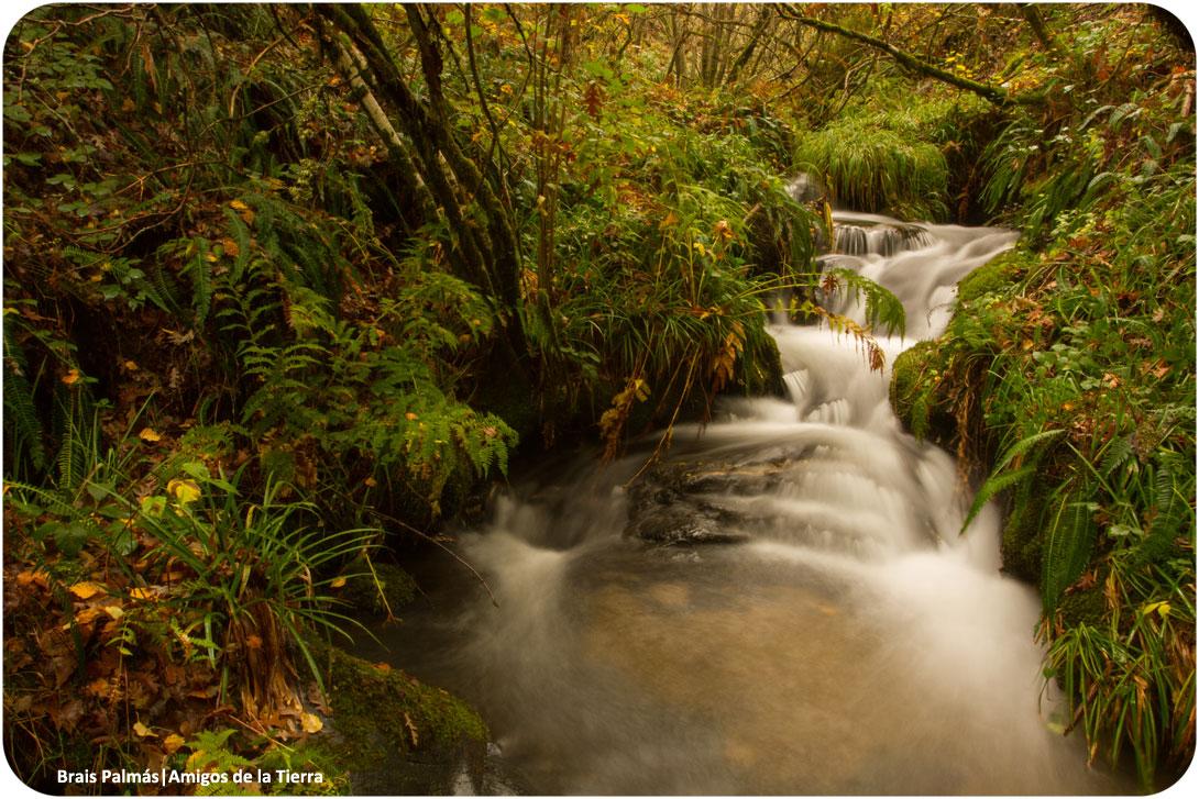 Ir a Una gran campaña ecologista salva las directivas europeas sobre Biodiversidad