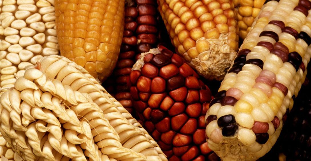 Ir a Agricultura y alimentación sin transgénicos
