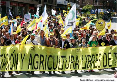 Ir a Gran paso contra los cultivos transgénicos en la UE