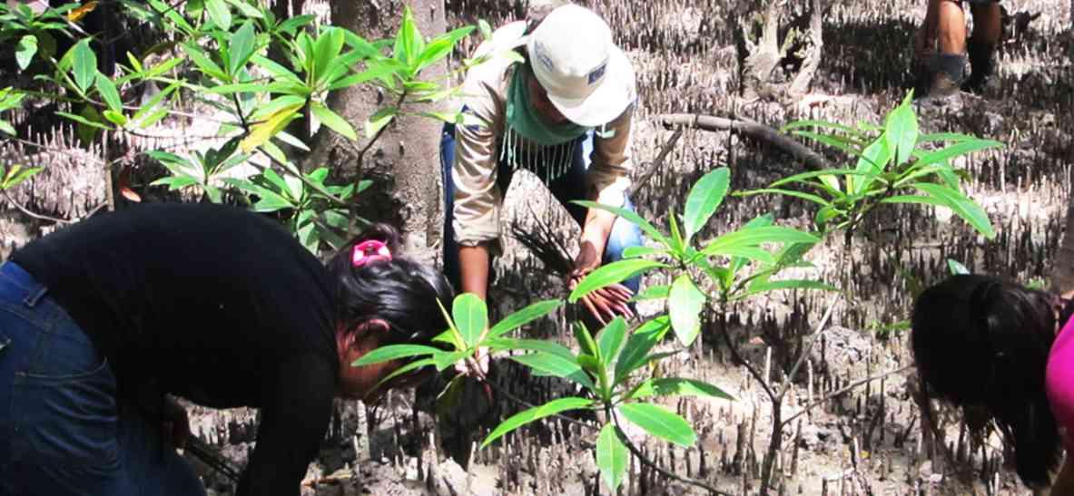 Ir a Proyectos de El Salvador