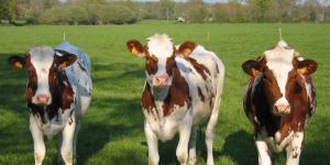 ttip_y_agricultura
