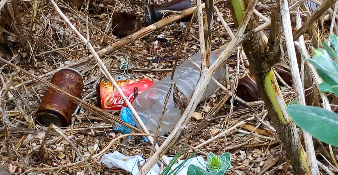 Ir a Las Cortes Valencianas también quieren un Sistema de Depósito que acabe con latas y botellas abandonadas