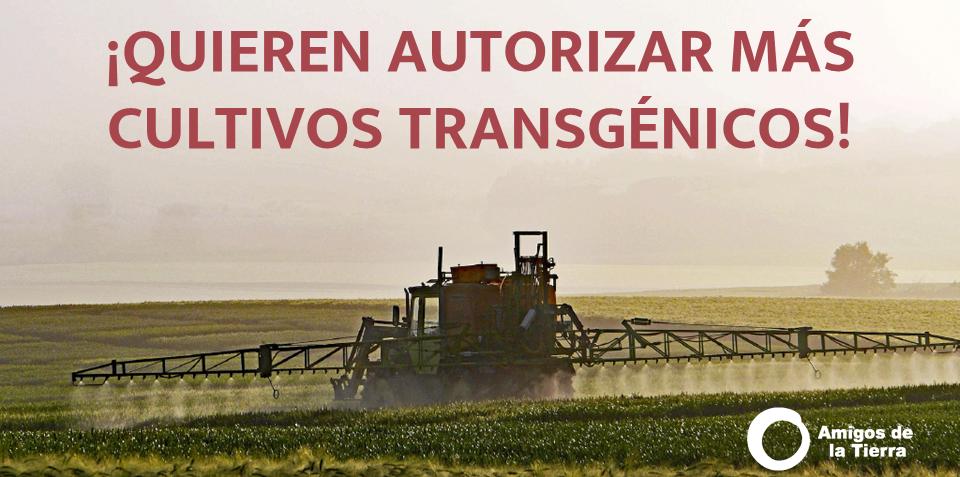 Ir a Gigantes de la biotecnología incumplen la ley para acelerar el cultivo de nuevos transgénicos