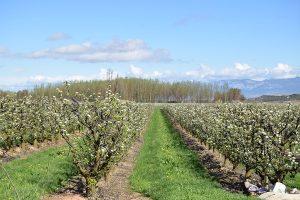 Ir a La Rioja: Del campo a la mesa