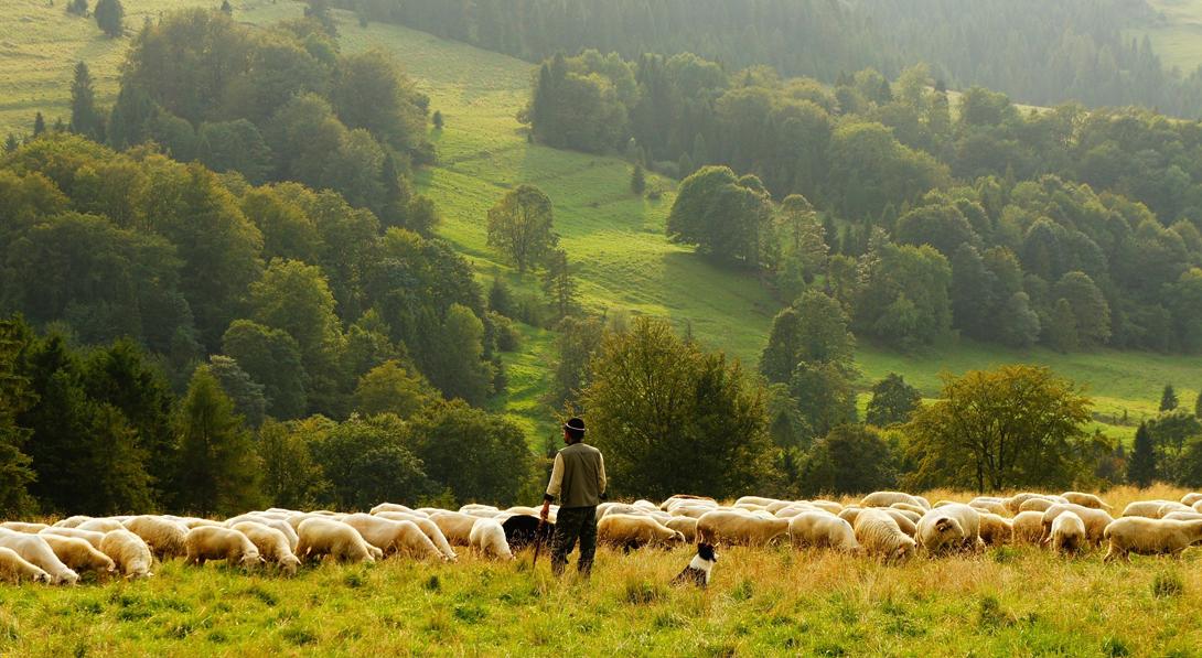 Ir a La agroecología aumenta las cosechas y protege el entorno
