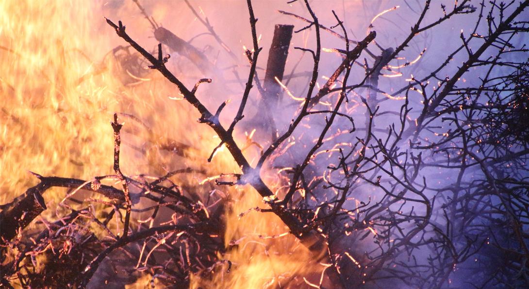 Ir a Amigos de la Tierra advierte de la próxima oleada de incendios en Galicia