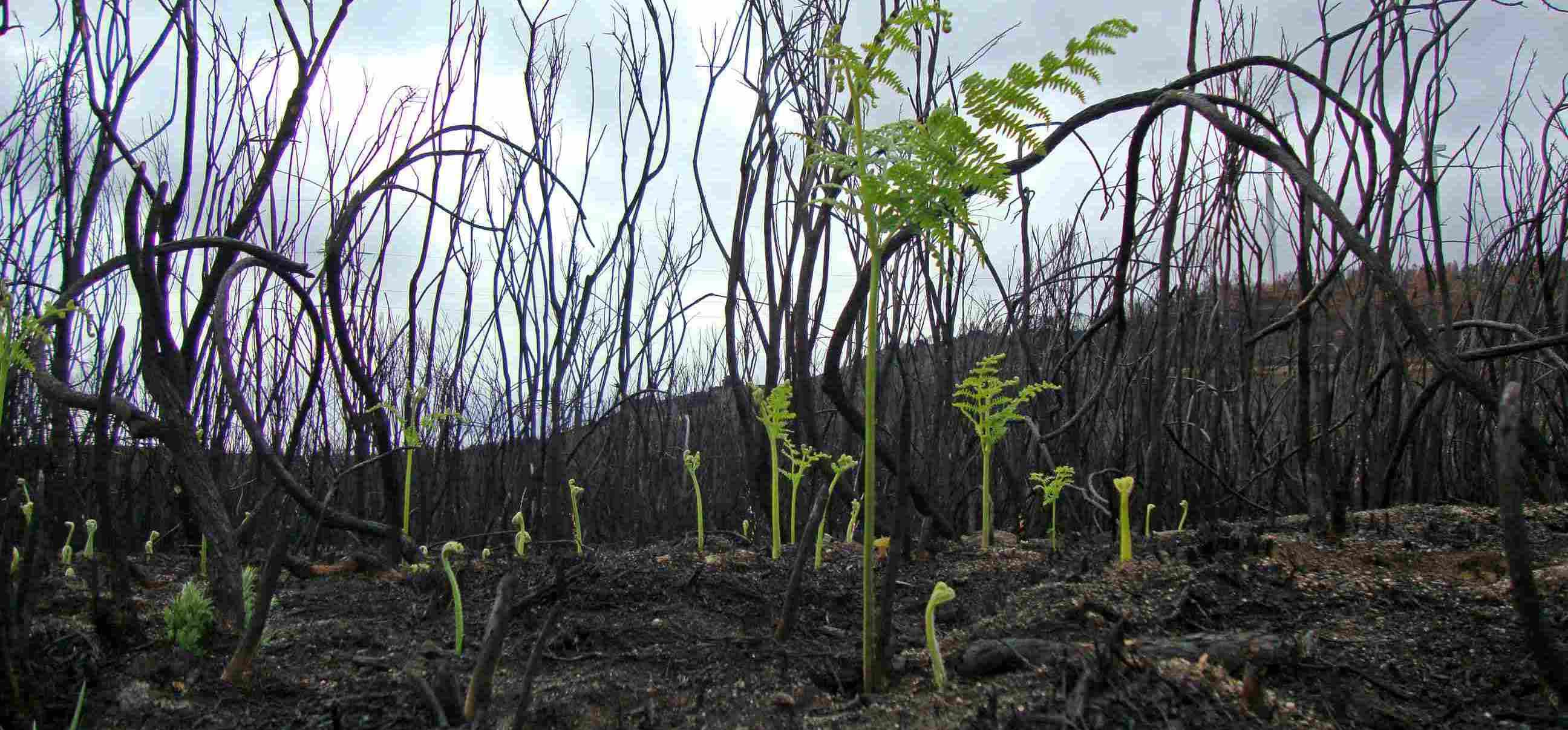 regeneración forestal