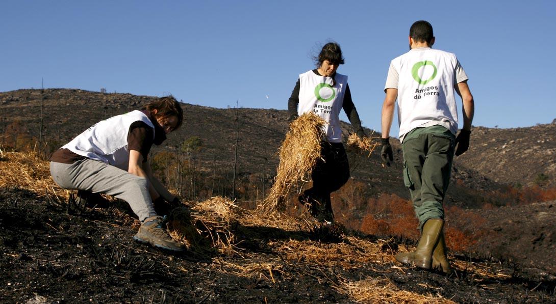 Ir a Galicia: Acciones de regeneración forestal tras los incendios