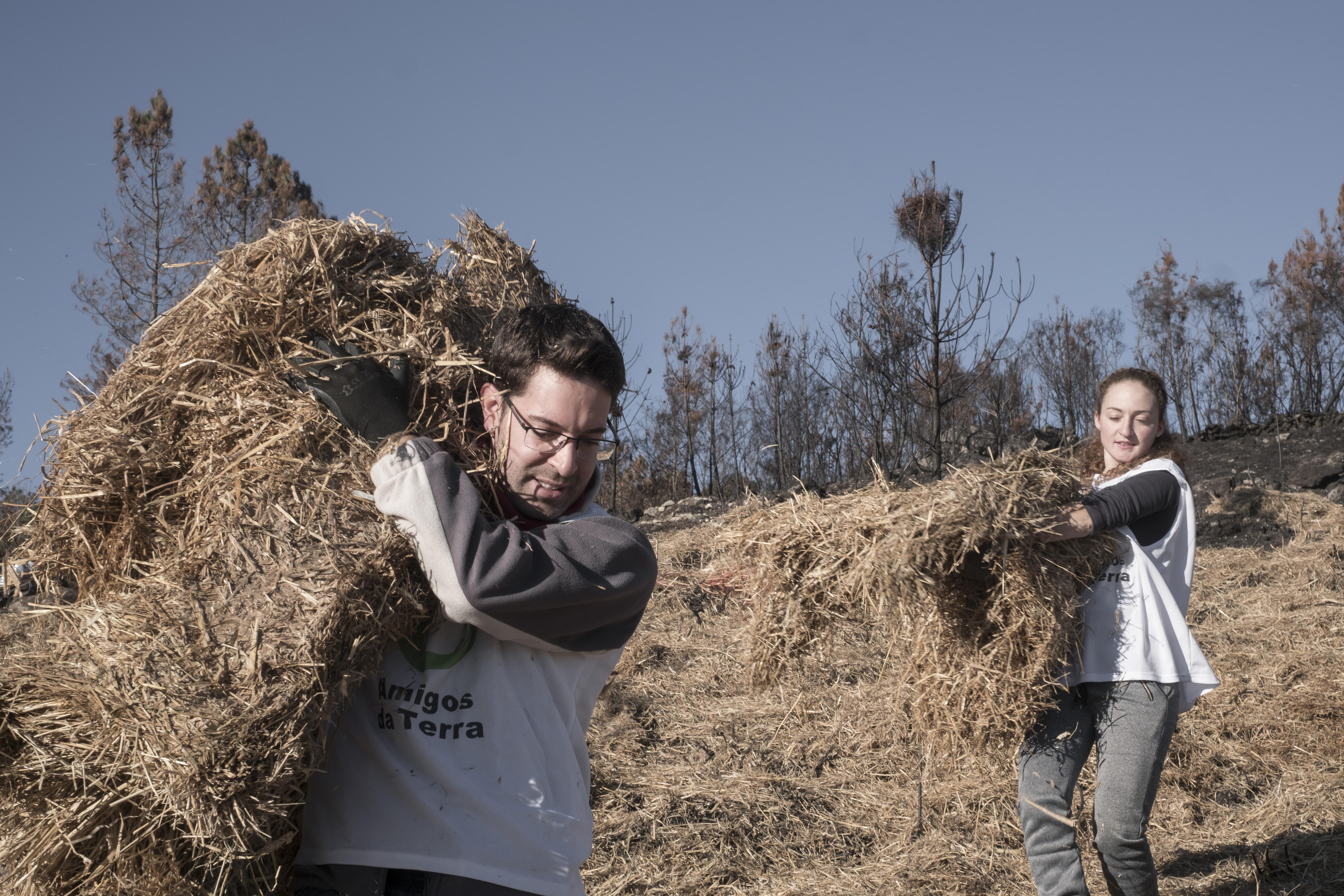 Ir a Galicia: Acciones de regeneración forestal tras los incendios del mes pasado