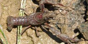 especies invasoras Patrimonio Natural y Biodiversidad