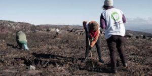 regeneración tras incendios forestales