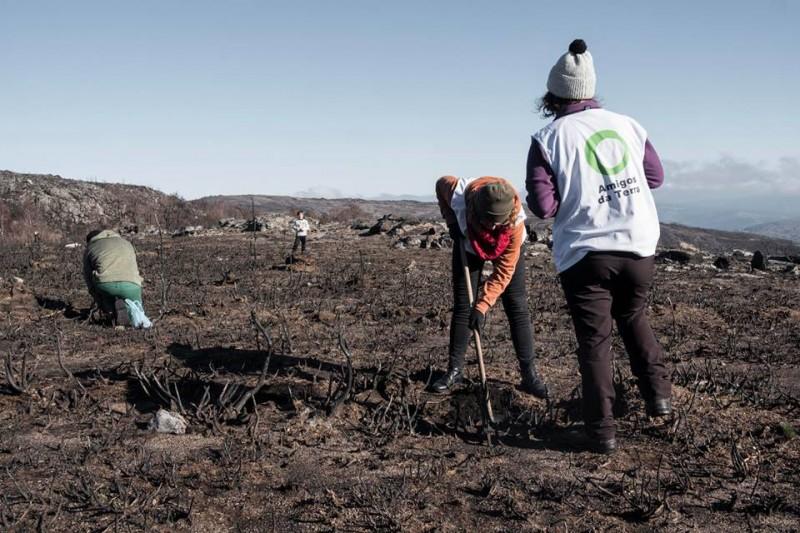 Ir a Galicia: Plantación forestal en Melón (Ourense)