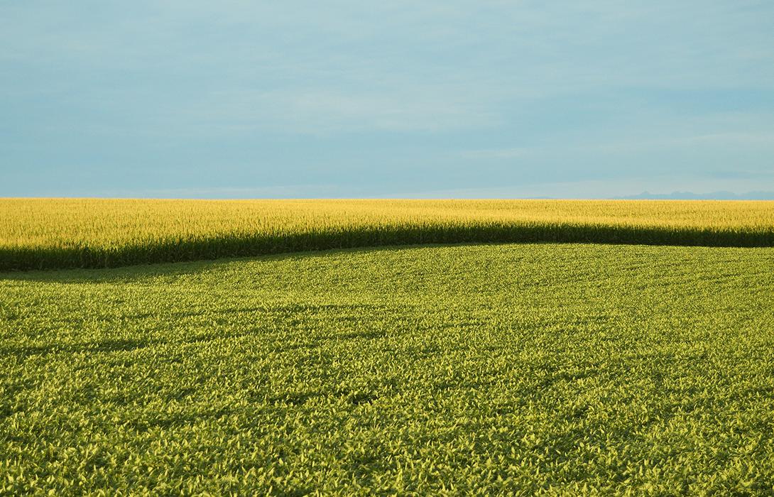 Ir a El máximo tribunal de la UE confirma los controles de seguridad necesarios para los nuevos 'OGM 2.0'