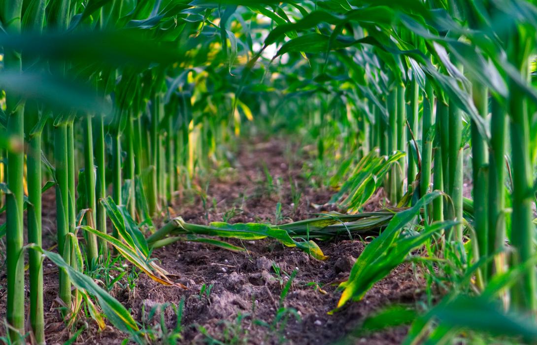 Ir a Vídeos jornada prohibición cultivos transgénicos