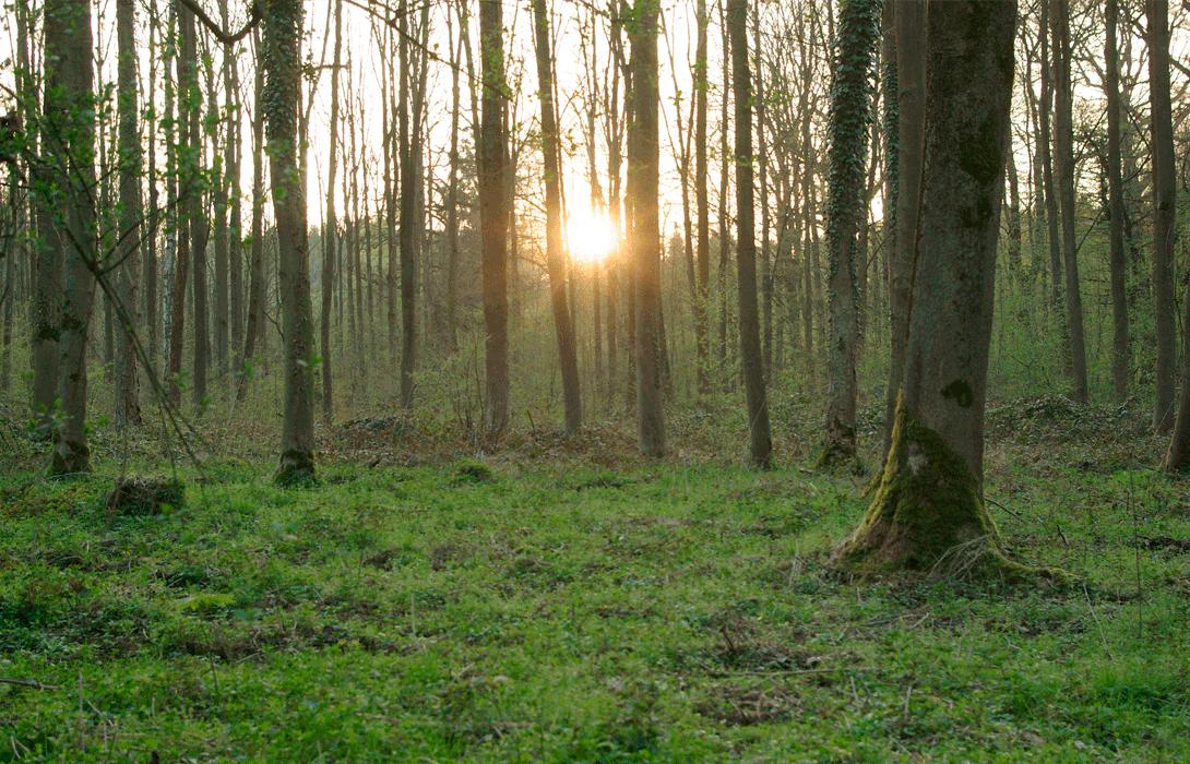 Ir a Victoria en la lucha contra la deforestación del bosque Hambach