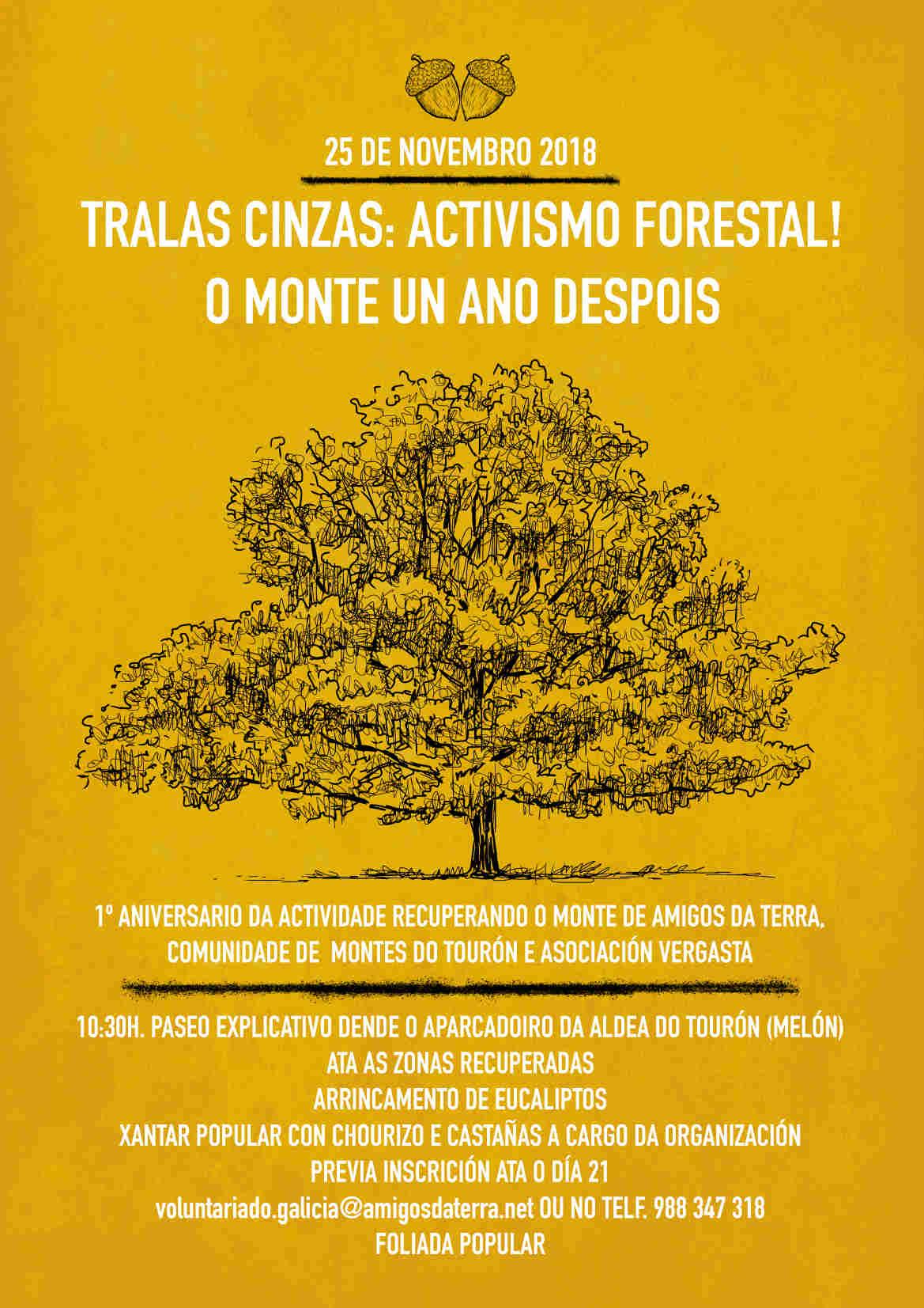 Ir a Galicia: Tralas cinzas! Activismo forestal! O monte un ano despois