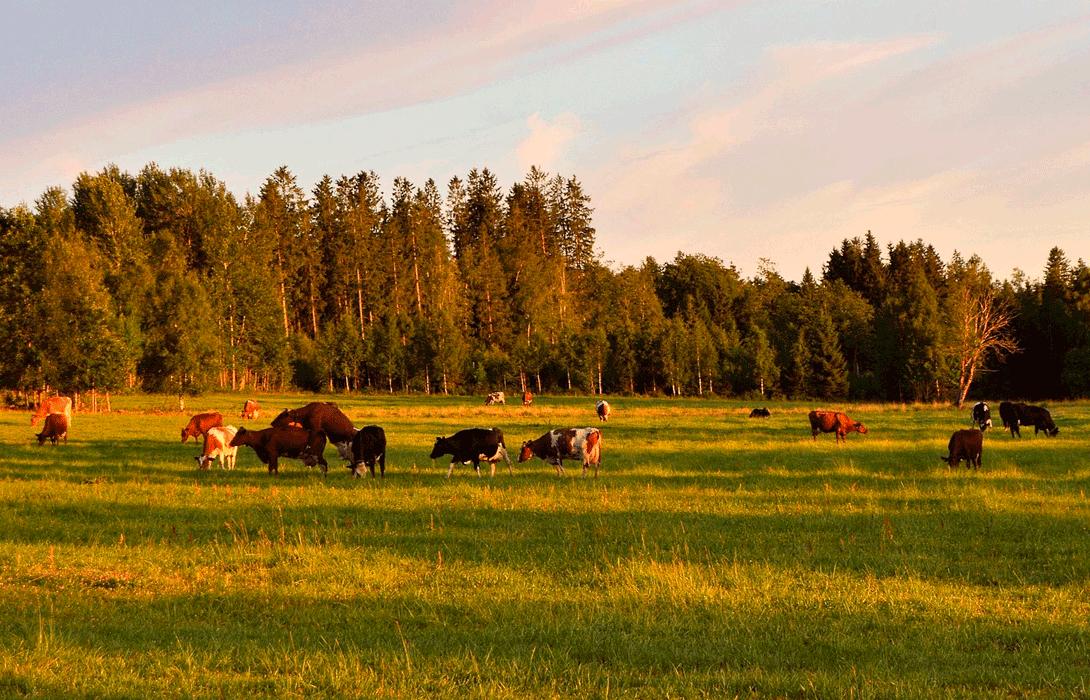 Ir a Colectivos ecologistas, agrarios, ganaderos y plataformas vecinales reivindican la ganadería familiar frente a la proliferación de las macrogranjas
