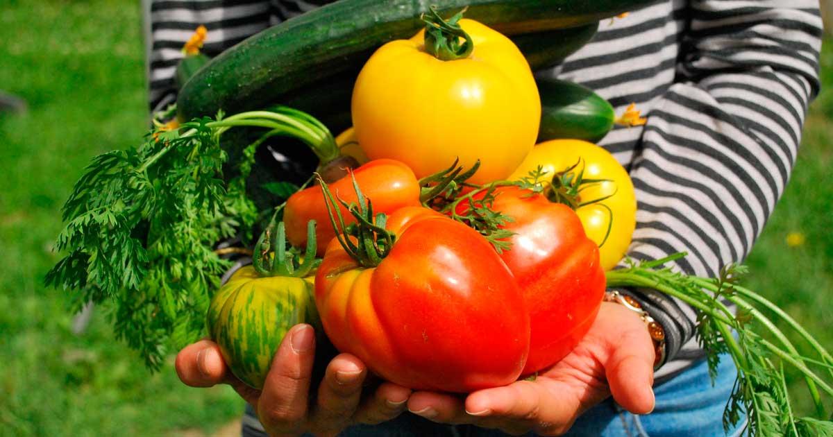 Ir a Agroecología: un modelo agroalimentario justo y saludable