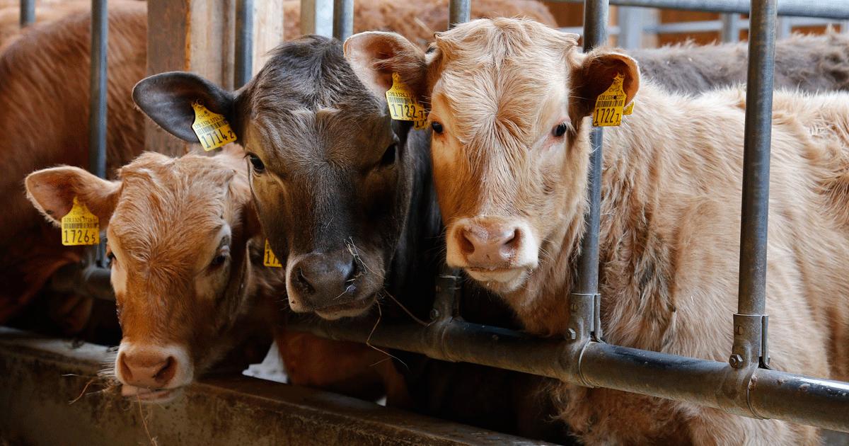 Ir a ¿Qué tiene que ver reducir el consumo de carne con el medio ambiente?