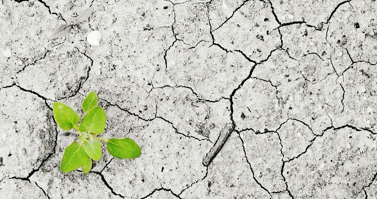 Ir a Más de 300 organizaciones nos sumamos a la Huelga Mundial por el Clima