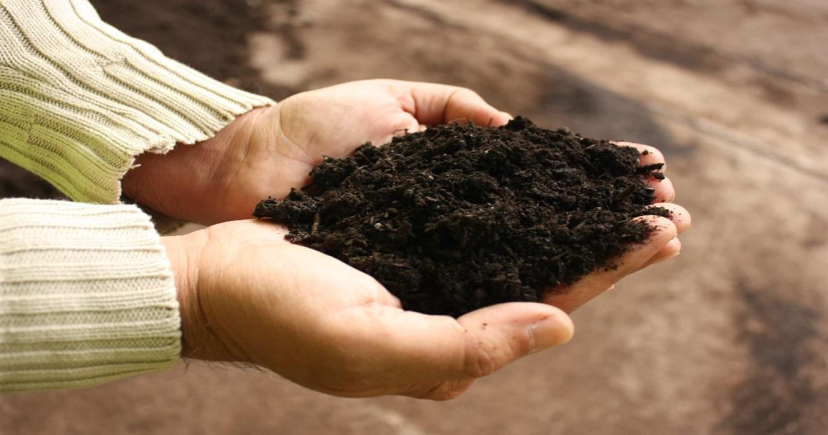 Ir a Apostamos por el compostaje para la creación de empleo