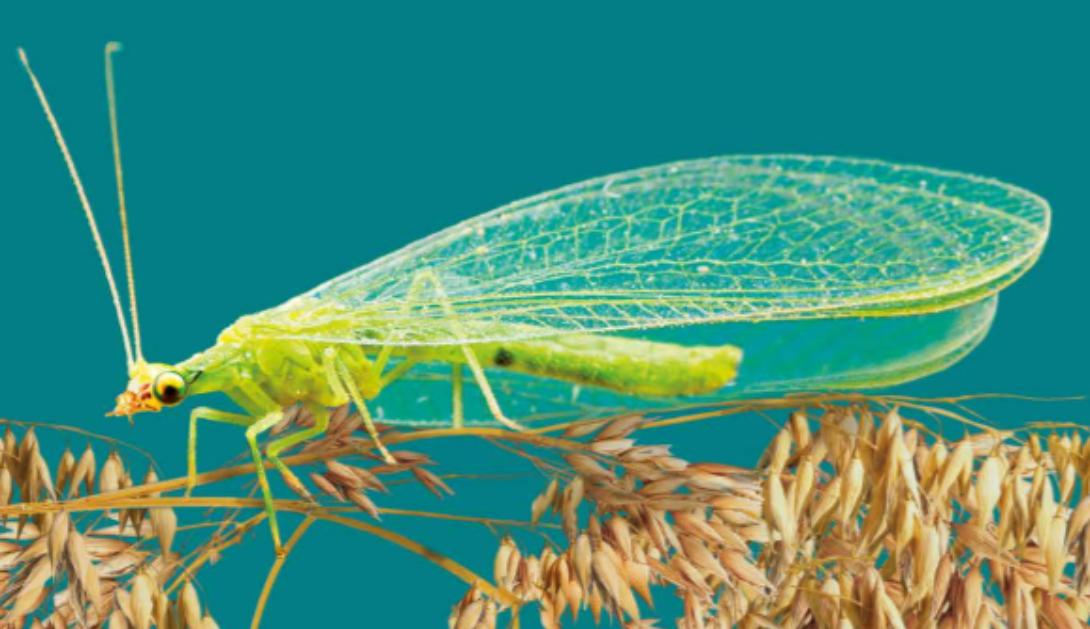 Ir a A través del Atlas de los Insectos denunciamos el colapso global de los insectos que provoca la agricultura industrial