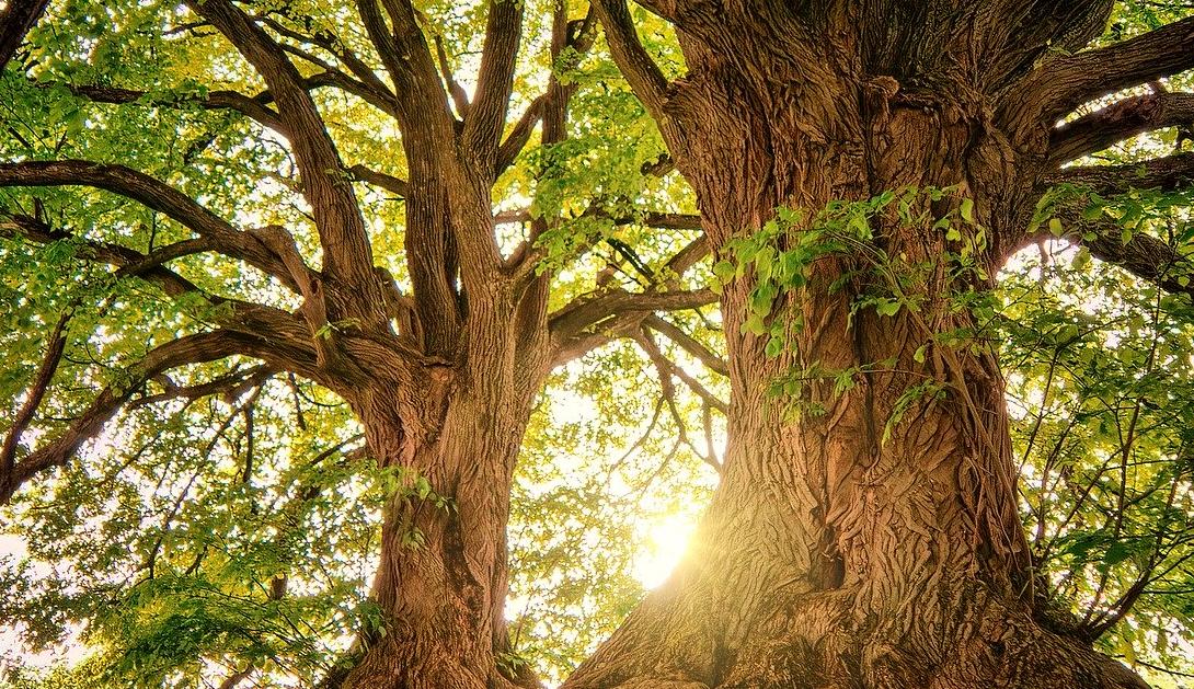 Ir a Las organizaciones ecologistas pedimos a la Comisión de Reconstrucción compromisos reales con la transición ecológica