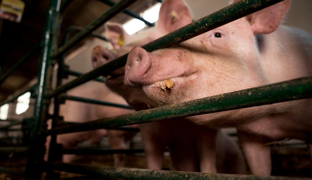 Ir a La ganadería y agricultura sostenibles han sido identificadas como medidas clave para frenar futuras pandemias, según un reciente informe de la ONU