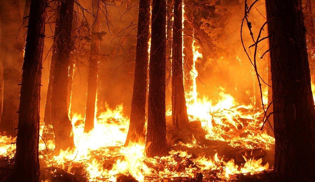 Ir a El acuerdo que arruinará los derechos humanos y avivará los incendios forestales