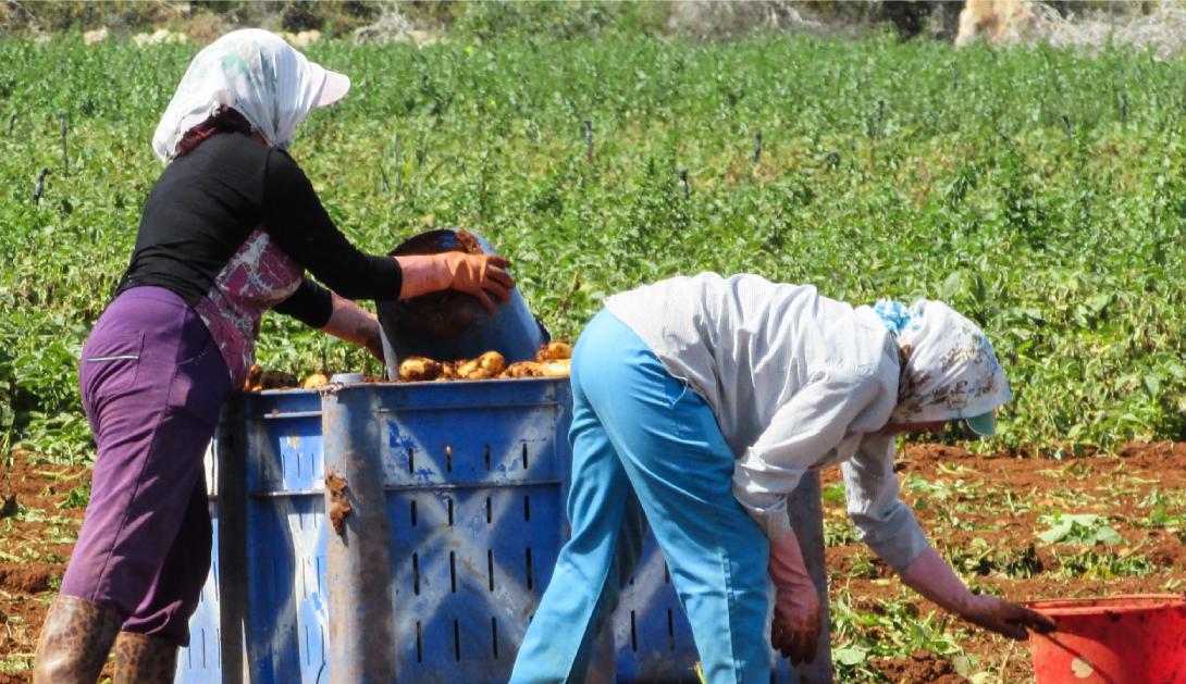 Ir a Evento digital: Migrar para trabajar en el campo en tiempos de COVID