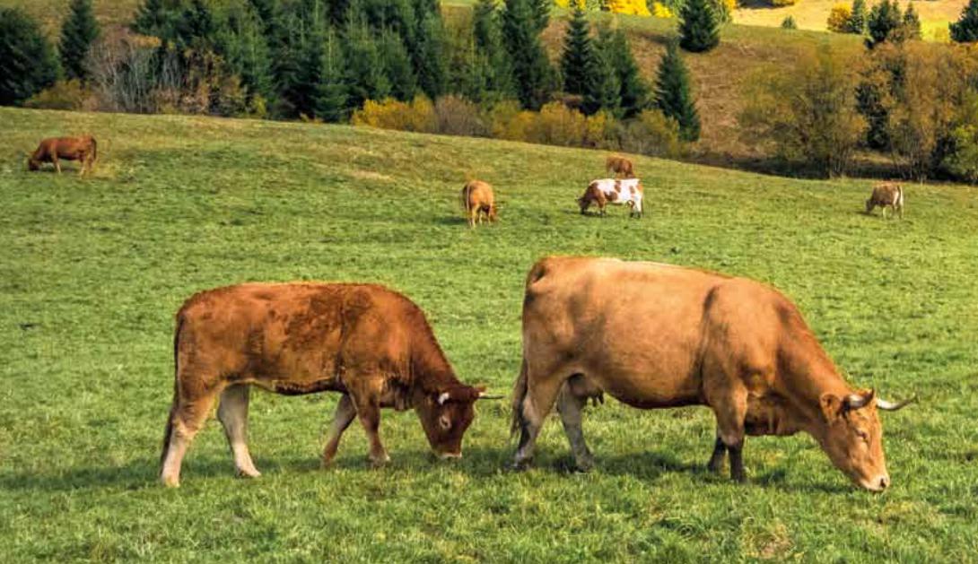 Ir a No toda la carne que consumimos impacta igual en el cambio climático