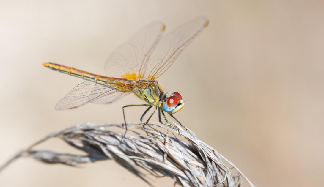 Ir a Presentamos el Atlas de los Insectos