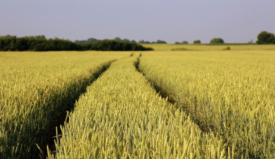 Ir a La Comisión Europea apoya la supresión de los controles de seguridad de los nuevos Organismos Genéticamente Modificados (OGM)
