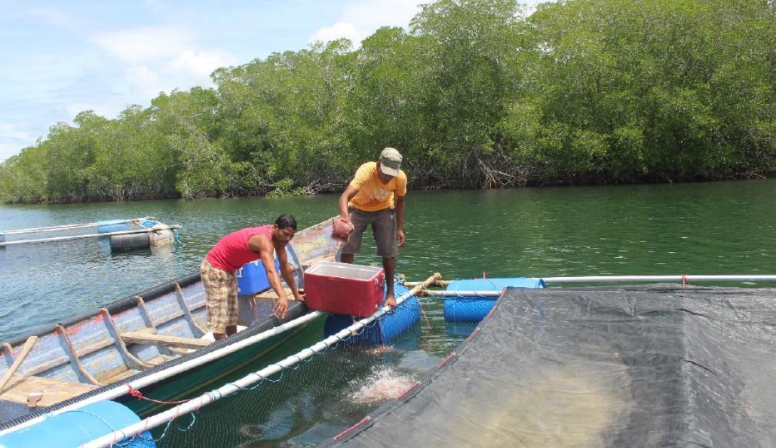 Ir a Pescadoras y pescadores nicaragüenses trabajan para combatir los efectos del cambio climático y la crisis sanitaria del COVID-19