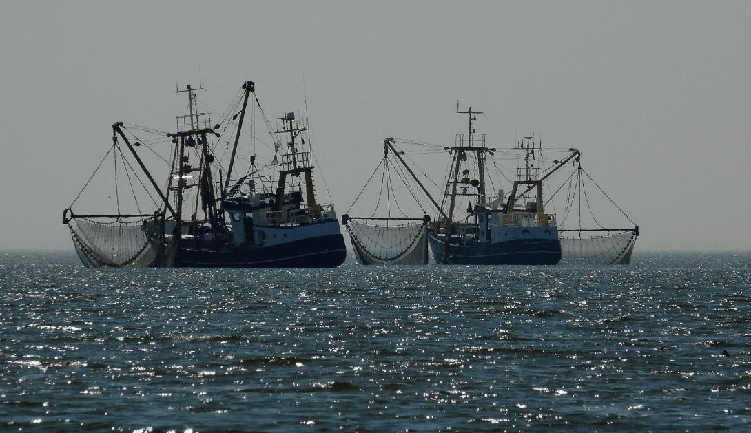 Ir a Las organizaciones ambientales demandamos una ley de pesca eficaz ante la crisis ecológica