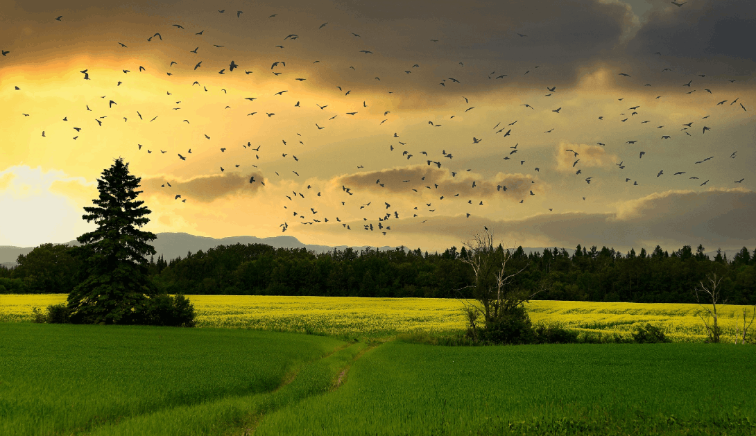 Ir a Cumbre de Biodiversidad COP15: ¿la última oportunidad para detener la crisis ecológica?